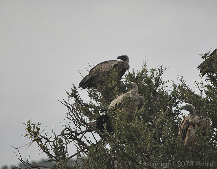 Even the vultures were magnificent.